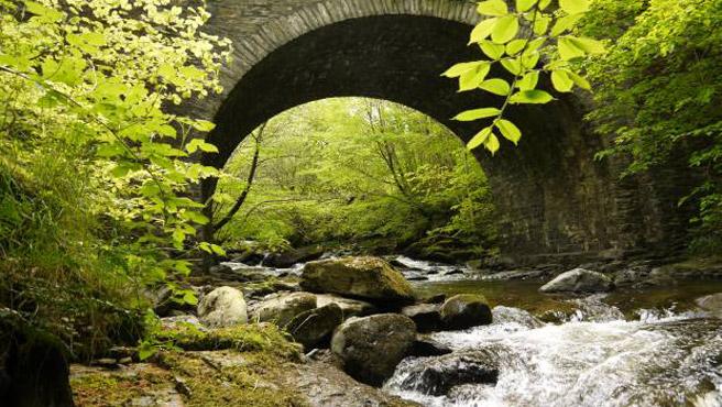 Impression der Speyside: Beschauliches Rauschen unter grünem Blätterdach. (Foto: Malt Whisky)