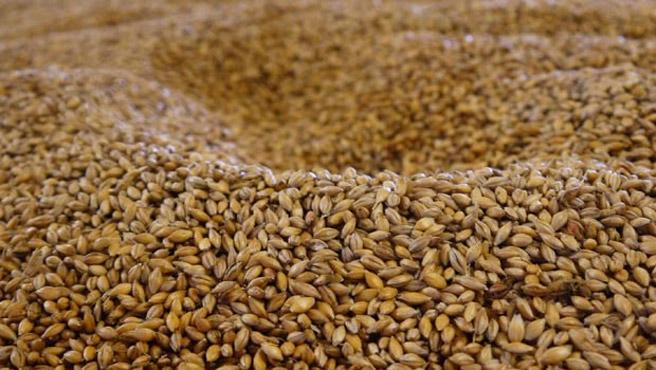 Neben Mais spielen in Bourbon-Whiskey auch Gerste, Roggen und andere Getreide eine große Rolle. (Foto: Malt Whisky)